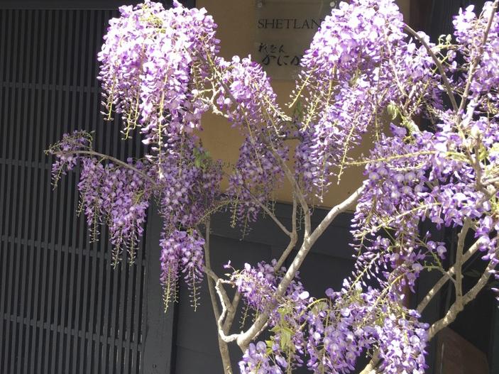 5月の定休日のお知らせ!